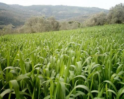 الاراضى الزراعية