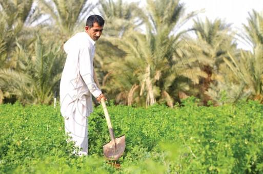 ادوات زراعية