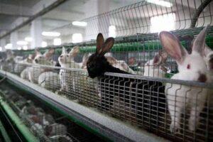 مزرعة ارانب