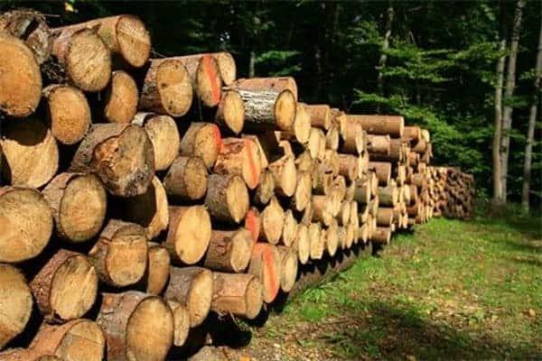 اخشاب الباولونيا