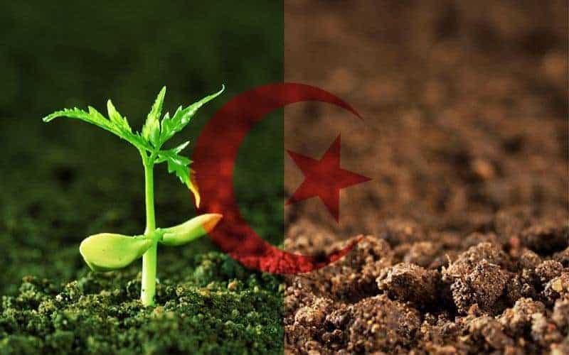 الاستثمار في الجزائر