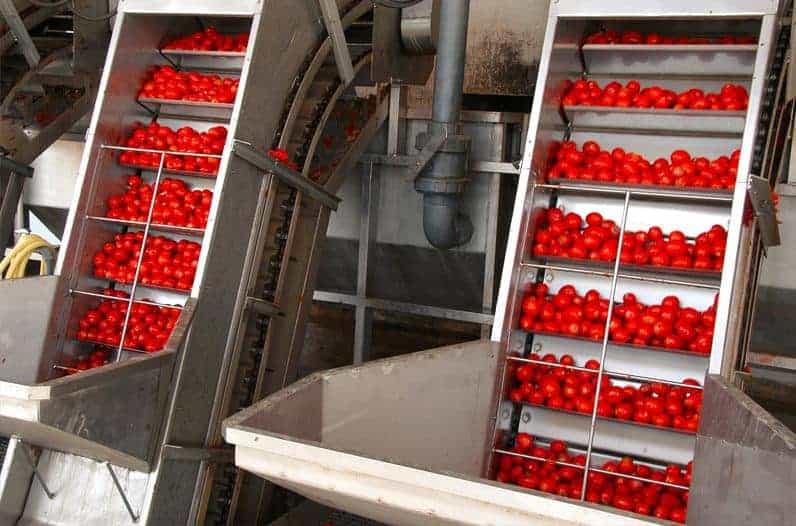 الطماطم-علي-السيور-الرافعة