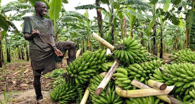 الاستثمار في اوغندا