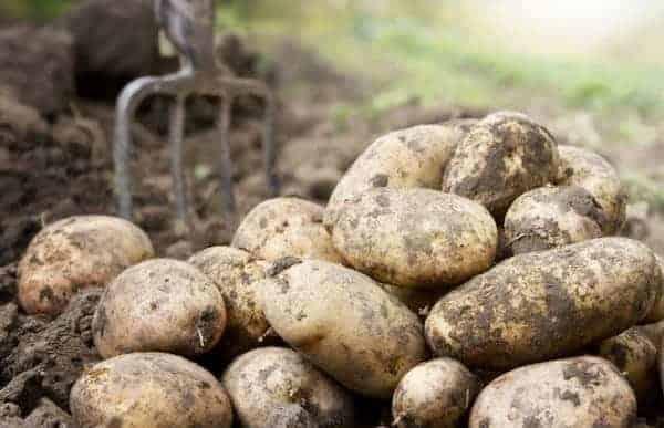 مشروع زراعي مربح