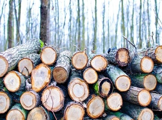 الخشب الموسكي